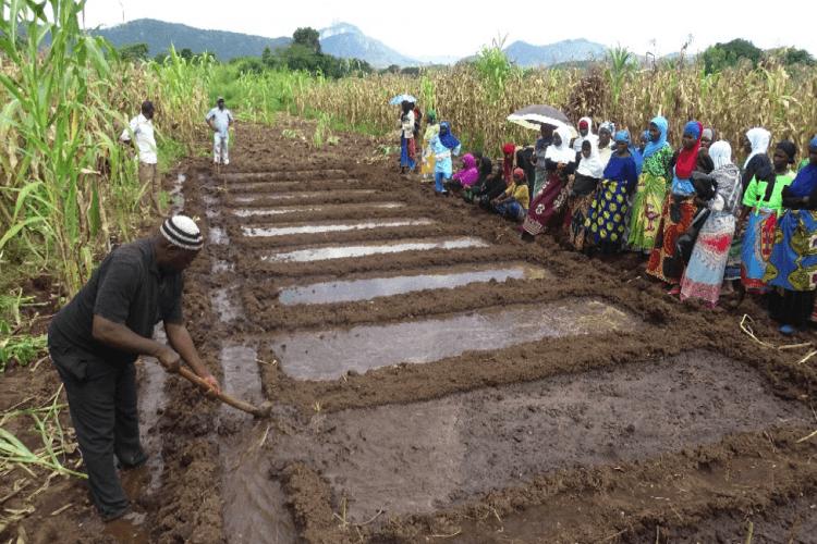 Mai Aisha Trust Constructs Two Irrigation Schemes in Mangochi
